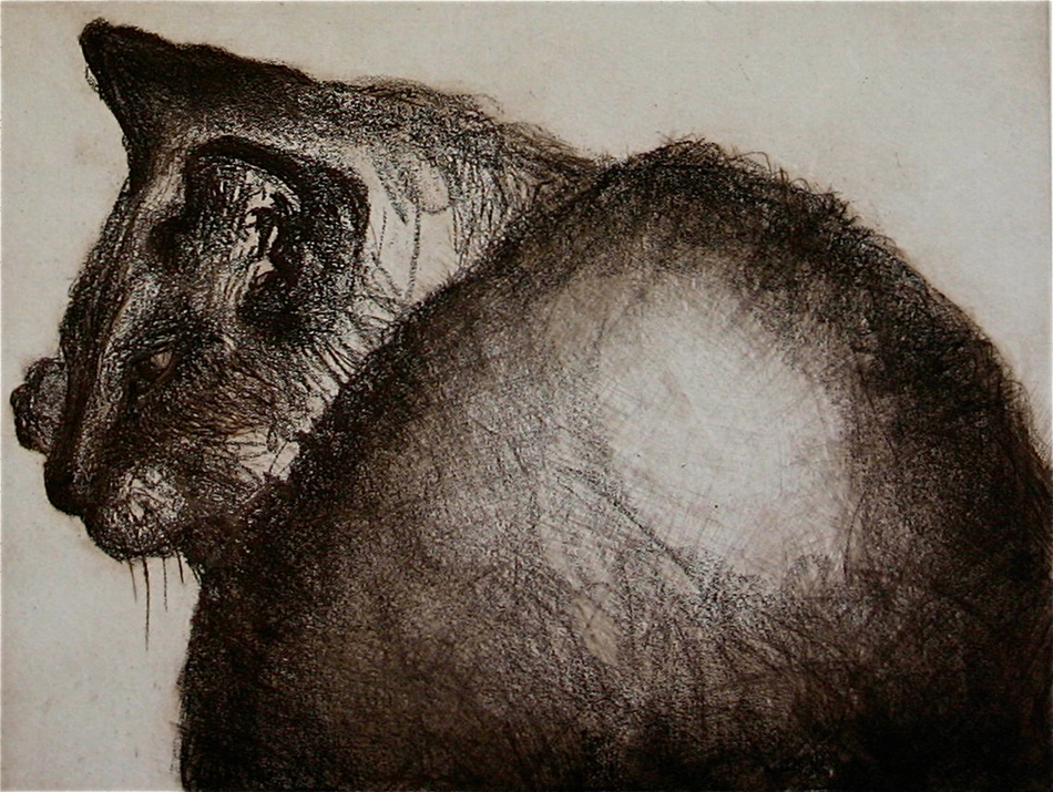 Daisey Too | 9x12 |Etching